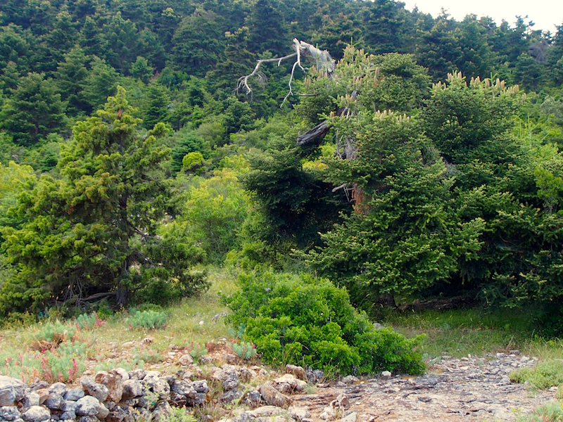 Habitat of <em>M. sakisi</em> near village Kremasti, Peloponnese, Greece (photo M.Gogala).